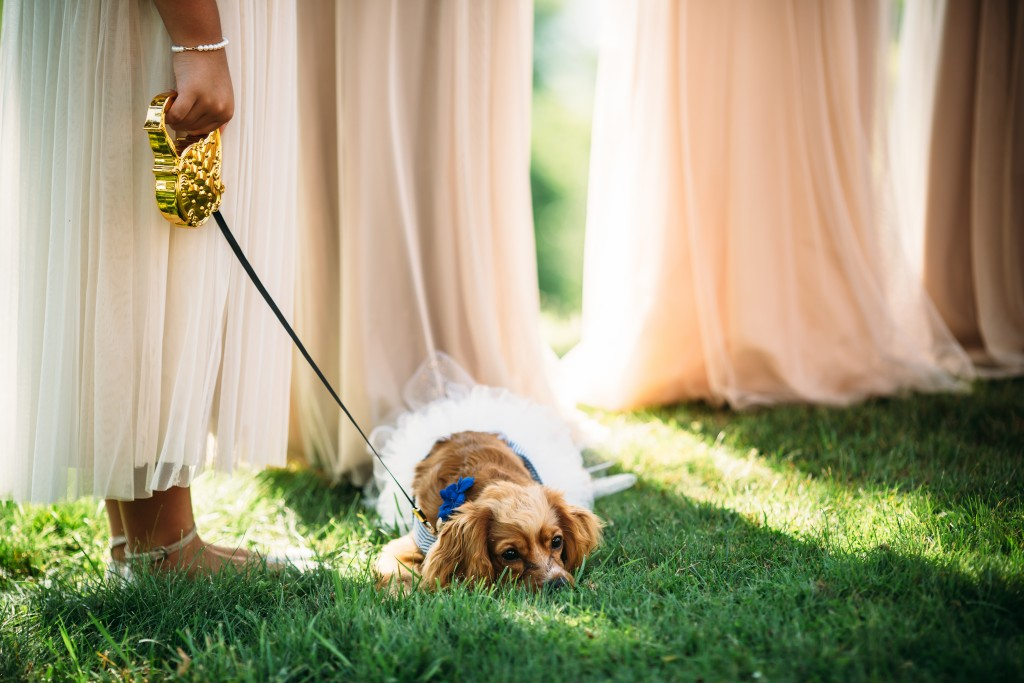 Dog part of wedding
